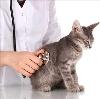 Ветеринарные клиники в Родниках